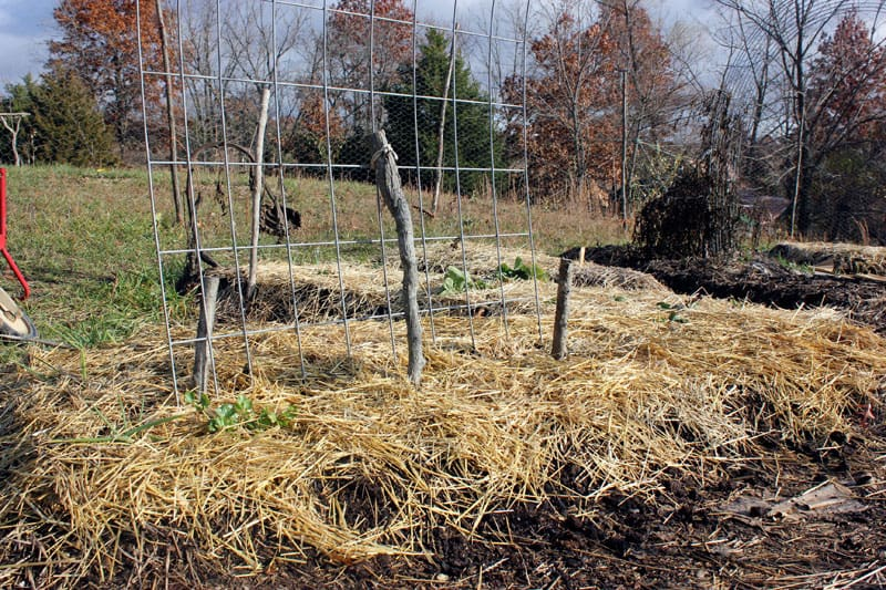 late fall garden covered in straw