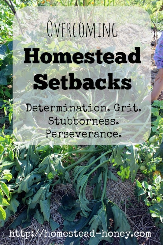 Overcoming Homestead Setbacks | Homestead Honey