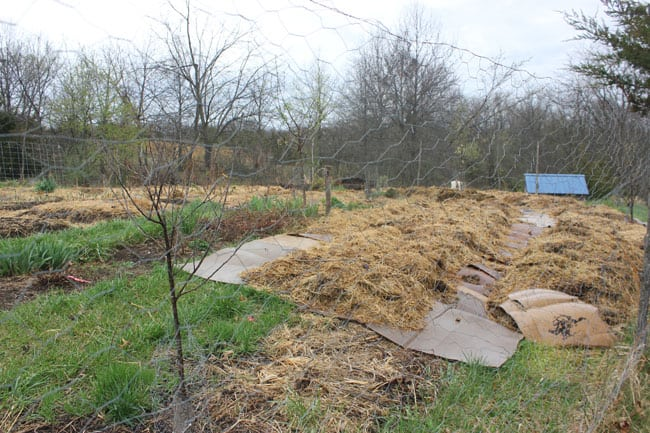 Creating new garden beds with sheet mulching