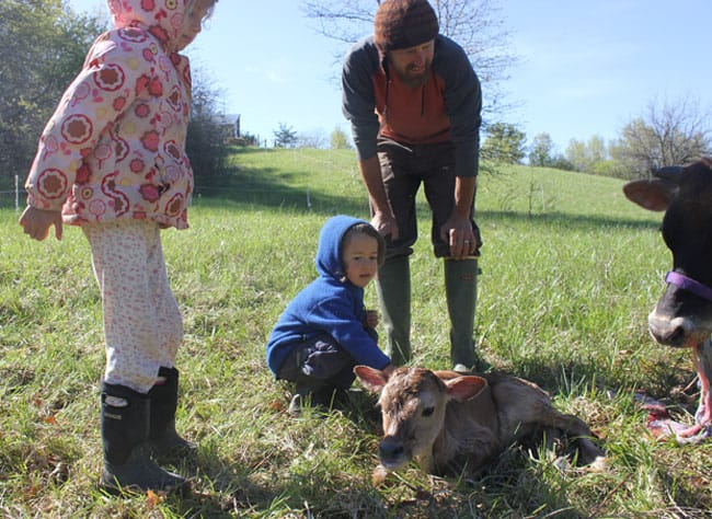 Homestead Kids get to greet our newborn calf | Homestead Honey