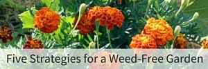 5 Strategies for a Weed-Free Garden