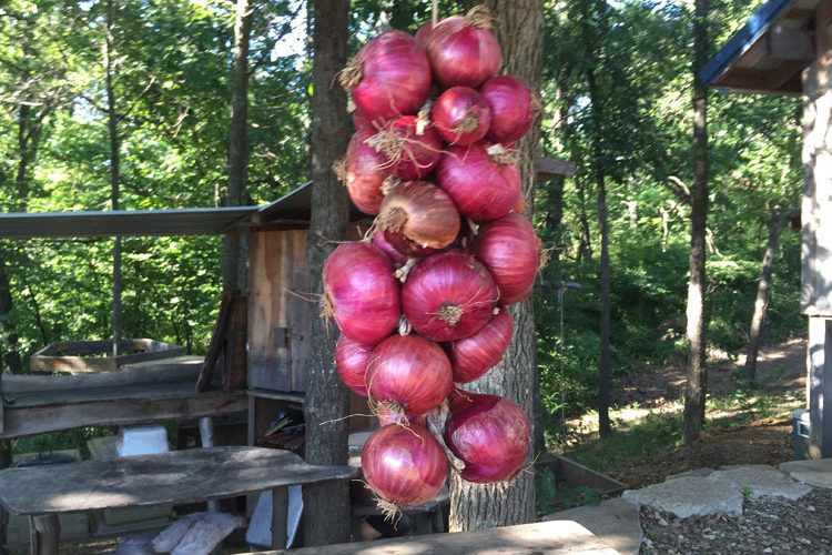 How to Hang Onions for Storage