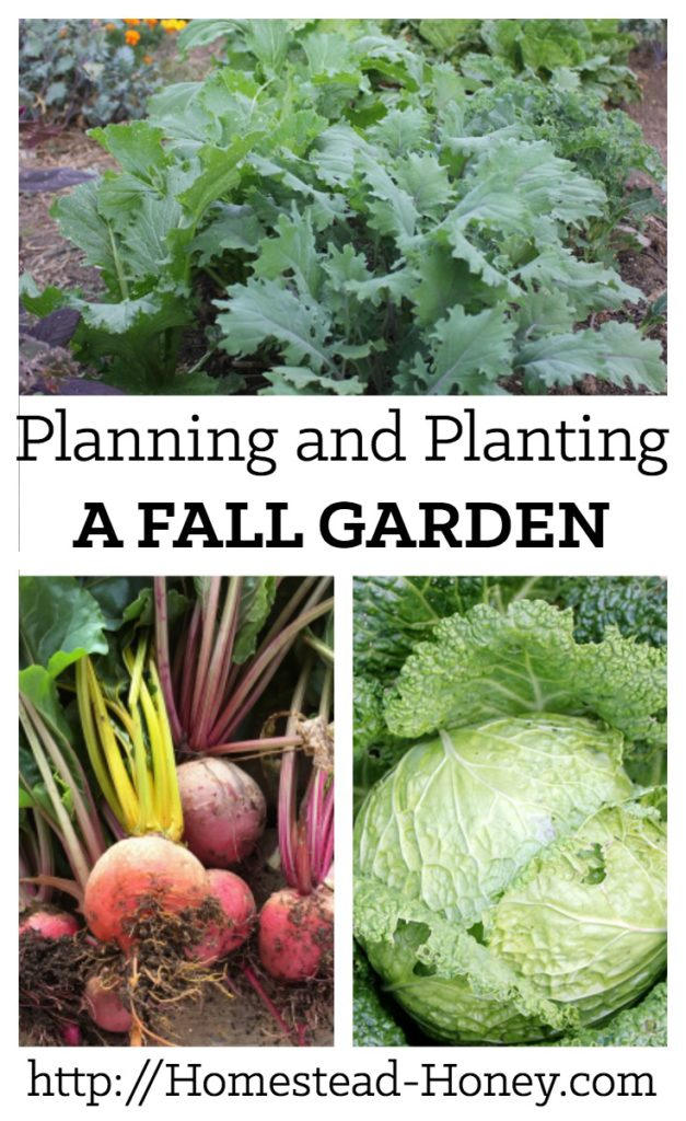 A bit of time in summer planning and planting a fall garden will lead to delicious harvests through the fall and winter. | Homestead Honey