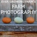 Ever Growing Farm | Farm Photography