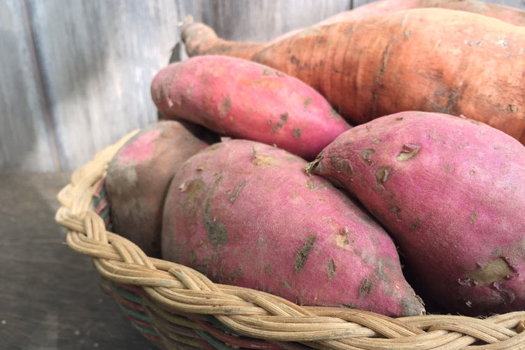How to Grow, Harvest, Cure, and Store Sweet Potatoes