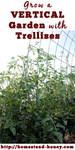 Vertical gardening with trellises saves space and creates visual interest in your garden! | Homestead Honey