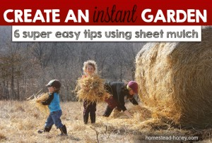 Sheet mulch garden