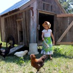 A Moveable Homestead Chicken Coop
