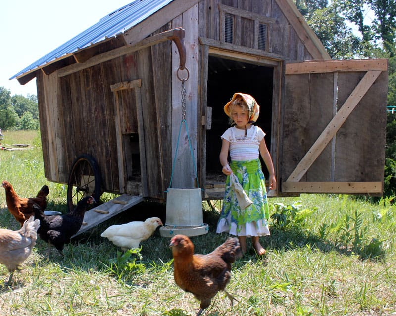 A unique, moveable chicken coop design for our homestead | Homestead Honey