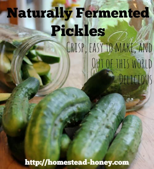 Naturally fermented pickles | Homestead Honey