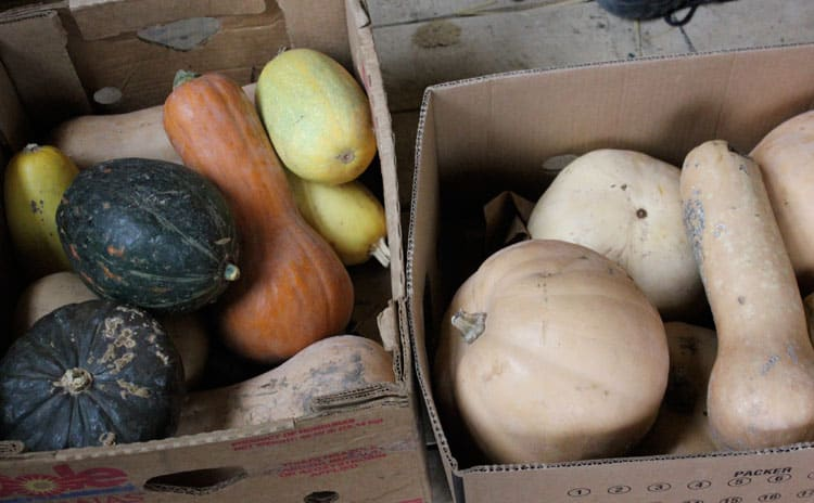 Winter squash for storage | Homestead Honey