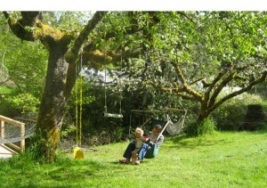 Fruit Trees provide shade