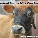 Homestead Dairy Cow Basics