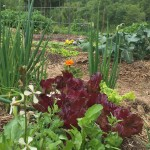 5 Spring Salad Greens for your Garden