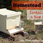 Homestead Beekeeping :: Installing a New Beehive