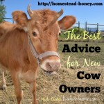What Every New Cow Owner Should Know…