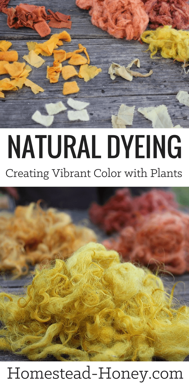 Beautiful, vibrant colors can be achieved in the process of natural dyeing with plants found on your homestead on in your backyard! Some plants that create vibrant color on silk and wool are pokeberries, black walnut, goldenrod, and Tickseed coreopsis. Watch the process from start to finish and see the colors that resulted from the natural dyes! | Homestead Honey