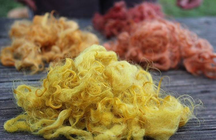 Wool dyed with goldenrod, Bidens, wild sunflower, and pokeberry | Homestead Honey https://homestead-honey.com