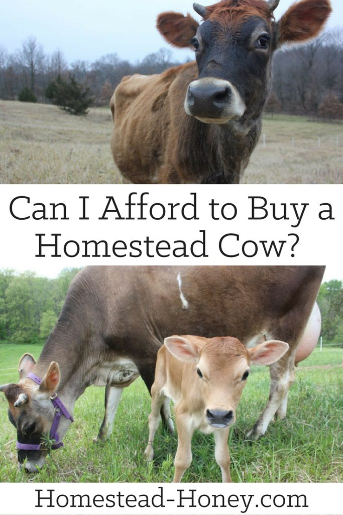 "A family milk cow brings innumerable benefits to your homestead, but it is also a fairly significant investment. Here's a close look at some of the ""money behind the moo"" so you can determine if you can afford a homestead cow. 