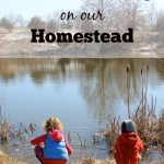 Waldorf Homeschooling on our Homestead