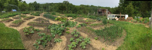 A panoramic view of the lower garden | Homestead Honey
