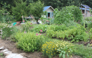Perennial and edible border | Homestead Honey