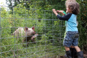 Moving our pigs to fresh pasture | Homestead Honey