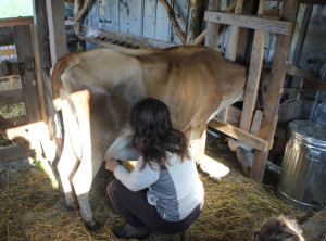 Morning milking chores start off our day on the homestead | Homestead Honey