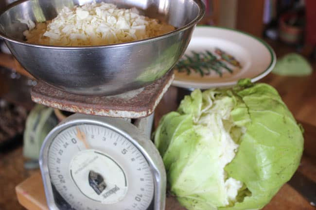 Chopping up cabbage for a giant batch of sauerkraut | Homestead Honey