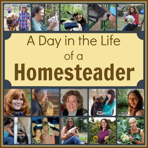Ever wonder what homesteaders do all day? Take a tour of 15 Homestead Bloggers daily life | Homestead Honey