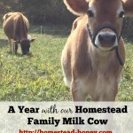A Year with our Family Milk Cow