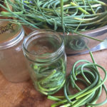 Lacto Fermented Garlic Scape Recipe