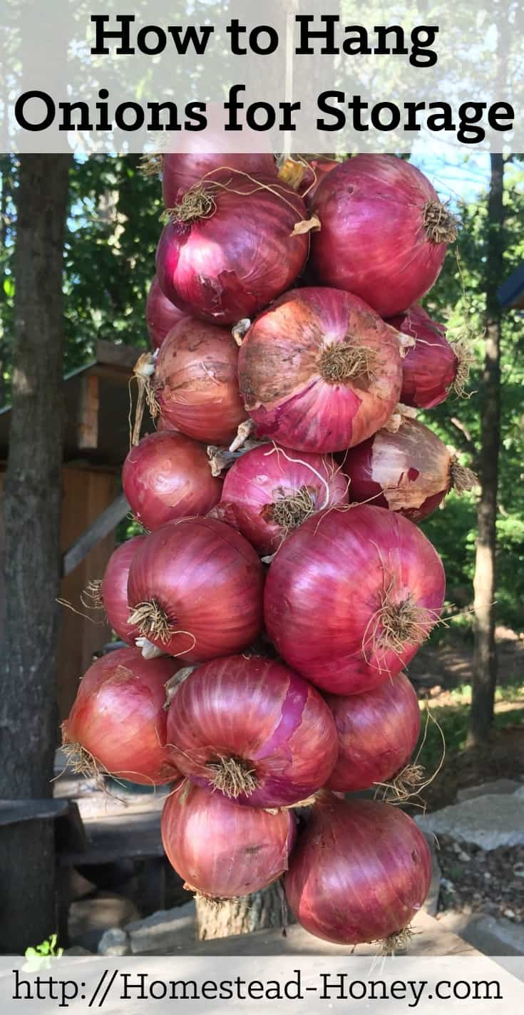 Ready to hang this year's onion crop? This video tutorial will teach you the quickest, easiest way to hang onions for storage! | Homestead Honey
