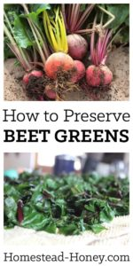 Next time you harvest beets, don't compost the tops! Beet greens are delicious fresh or preserved. Here's how to preserve beet greens for freezing. You'll love adding them to soups, stews, and casseroles all winter long! | Homestead Honey