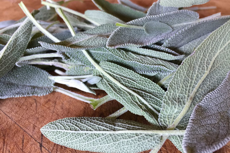 "Sage can be dried or frozen in an ""herbal cigar"" for winter eating"