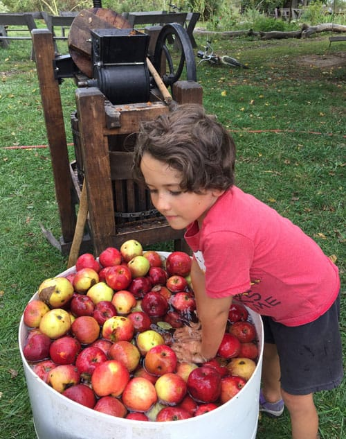 Rinsing apples before pressing them into cider.