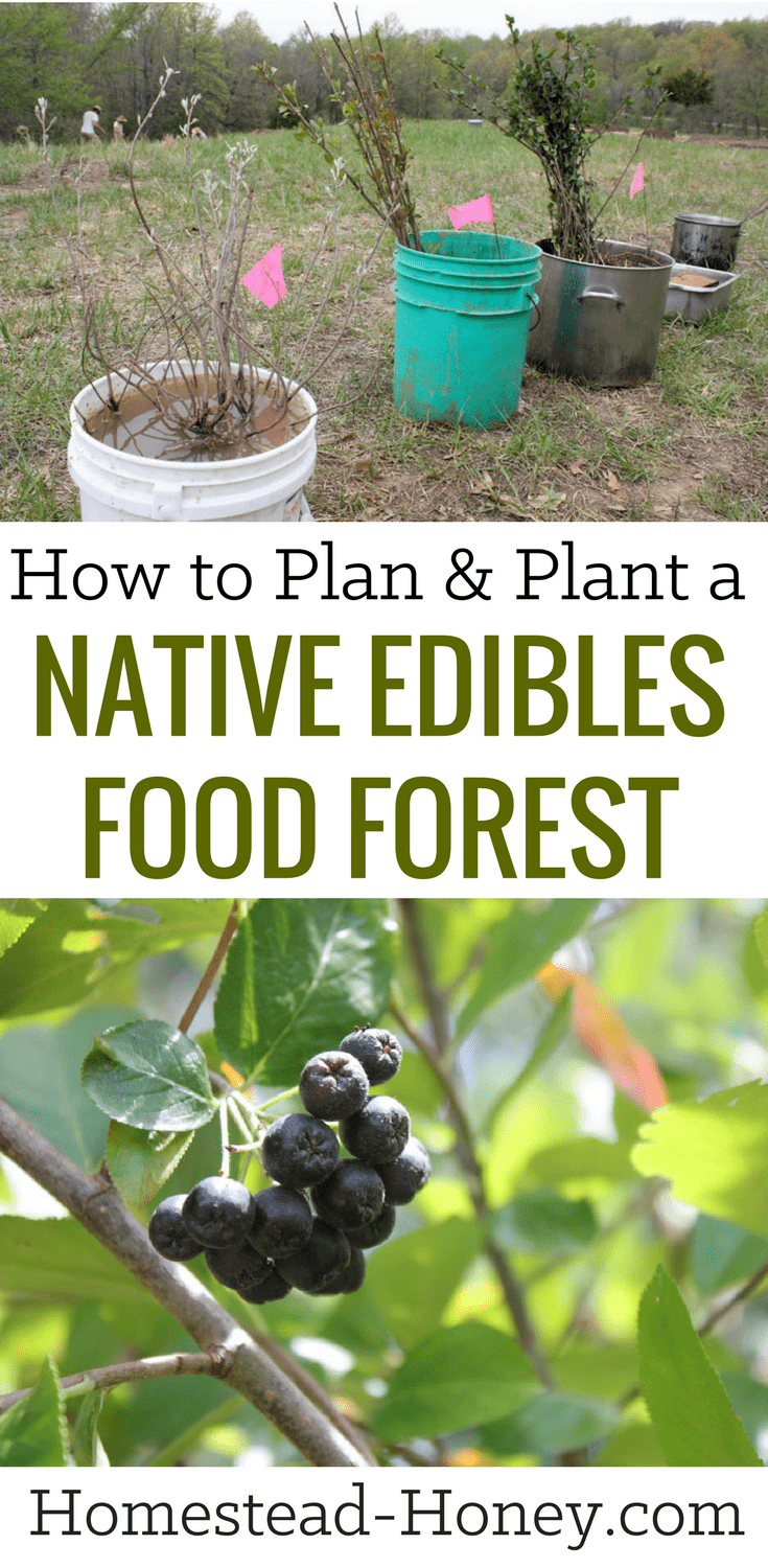 How to plan and plant a native edibles food forest