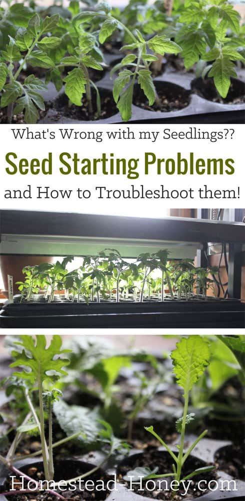 Seed Starting Problems and how to Troubleshoot them