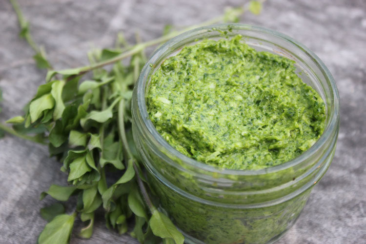 Spring Pesto with Chickweed and Green Garlic