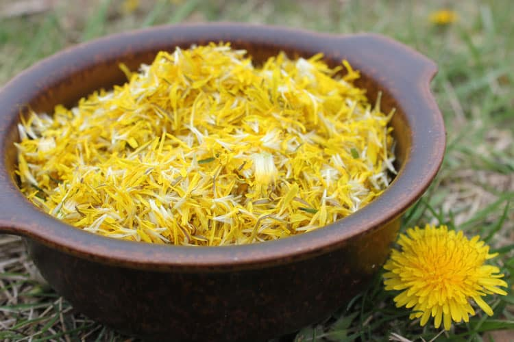 Dandelion petals ready to be made into dandelion soda