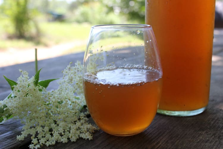 Elderflower kombucha is a delicious summer treat
