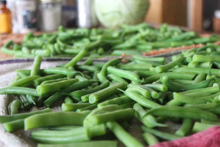 Green beans are ready to blanche and freeze