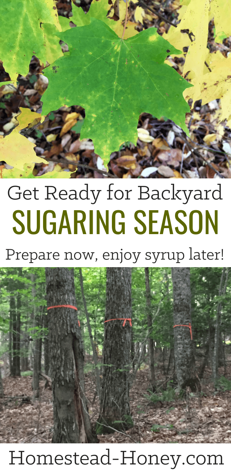 Get Ready for Backyard Sugaring Season